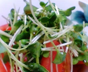 トマトと貝割れ大根のサラダ