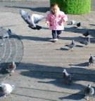 優美な鳩たち
