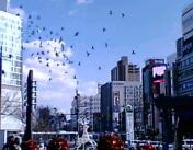 飛び立つ鳩たち