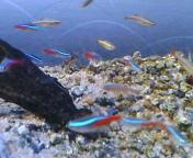 熱帯魚〜!