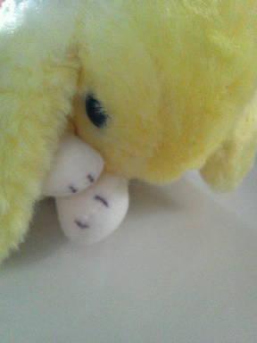 卵になってしまいそうな(?)黄色いうさぎ
