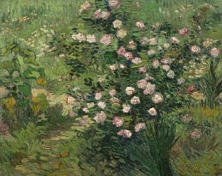 314pxvincent_van_gogh_roses