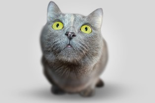 Cat351926_640_1