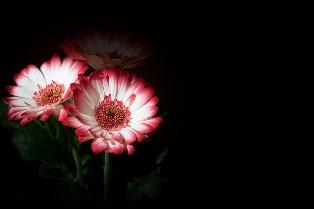Springflowers4056414_314