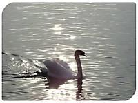 Animal2541_640_1