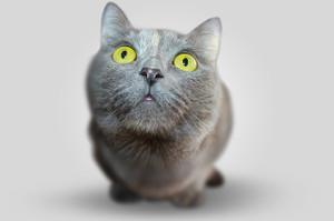 Cat351926_640