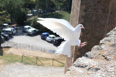 Bird465816_640