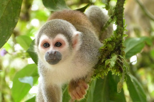 Monkey744440_640_2