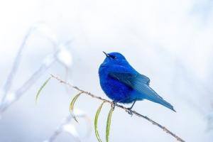 Blue5405703_640