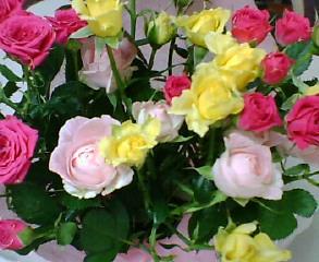 娘が贈ってくれた母の日の薔薇