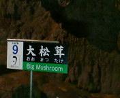 秋芳洞 No.20