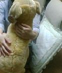 娘に抱かれた犬