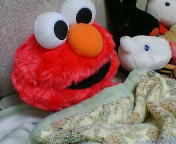 エルモと寝ていました