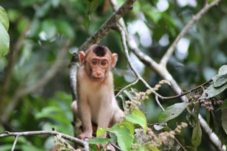 Monkey5252087_640